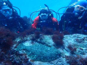 ディープ講習で透明度抜群の海洋公園へ
