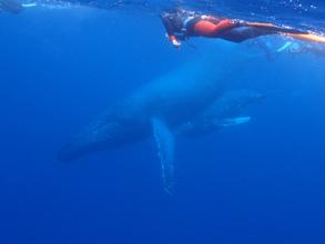 徳之島クジラと泳ぐツアーの大成功報告
