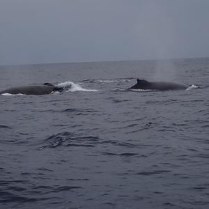 クジラと泳ぐツアー2020〜1日目〜