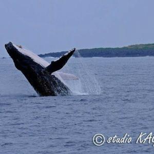 クジラと泳ぐツアー2020イルカも出たよ 〜2日目〜