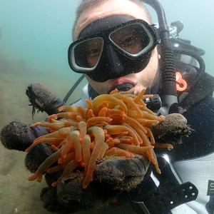 ダイバーの手で漁礁を作る〜イソギンチャク移植編〜1回目