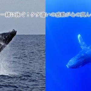 クジラと泳ぐ!絶叫の徳之島ツアー