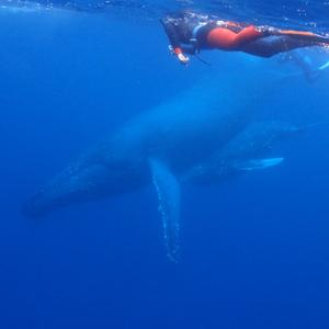 ホエールスイム(クジラと泳ぐ)ツアーの詳細決定